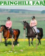 Springhill Farm Riding Stables & Bunkhouse